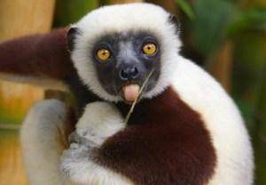 Zoboomafoo Lemur Dead