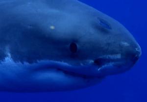 Shark Week Video
