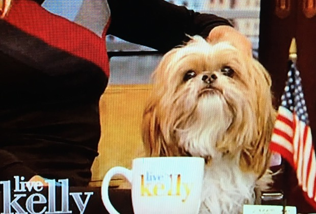 Live With Kelly Dog