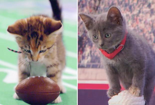 Kitten Bowl 2018