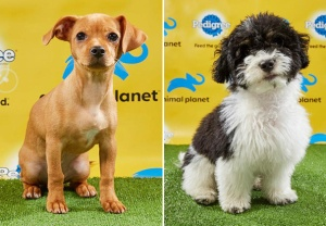 Puppy Bowl 2019 Photos