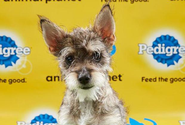 Puppy Bowl 2019 Photos