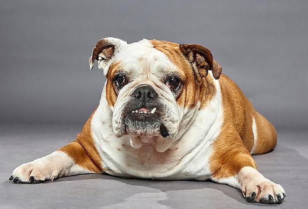 Dog Bowl 2020 ROxy