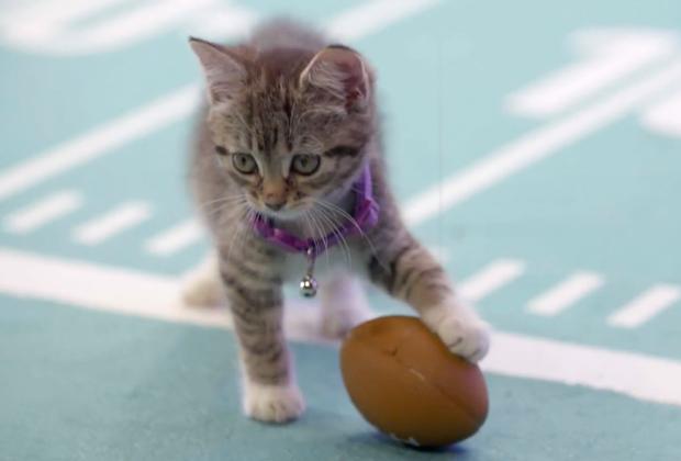 Kitten Bowl 2020