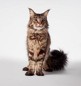 Star Trek Discovery Cat Grudge