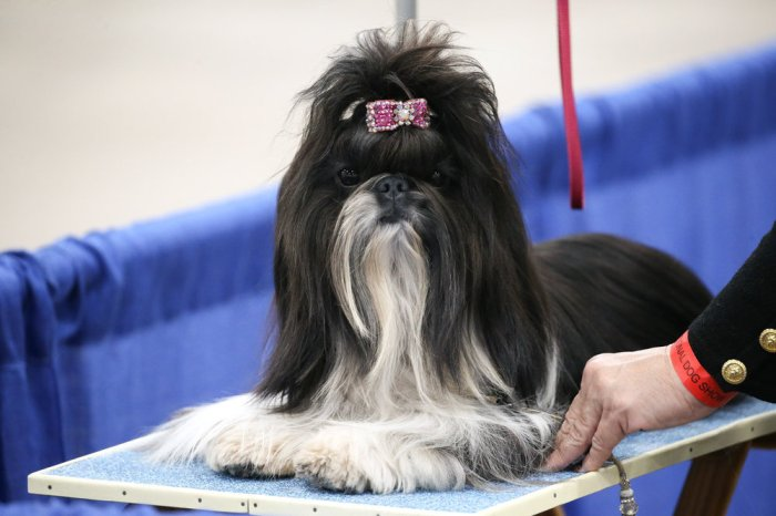 National Dog Show 2020