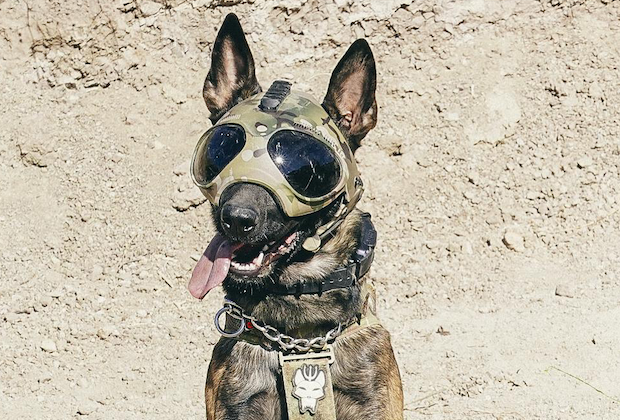 Meet SEAL Team's New Canine Hero