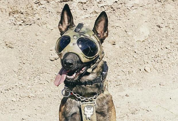 Meet SEAL Team's New Canine Hero