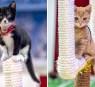 Kitten Bowl 2021